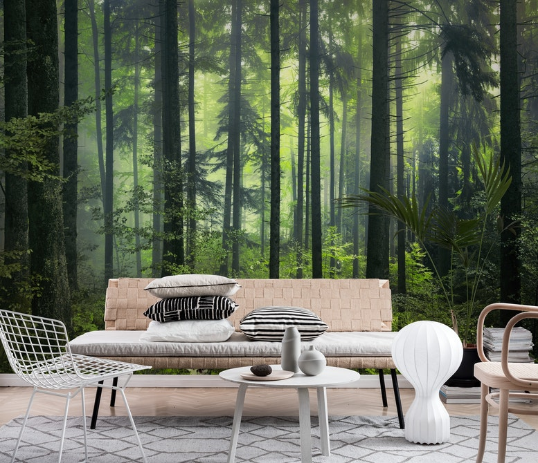 Green forest Wall mural Photo wallpaper Forest Happywall
