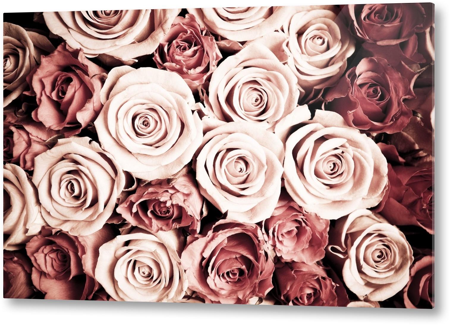 faktum k?k m?tt  Rosor tavla Canvastavla Ros Rosa R?da Romantik