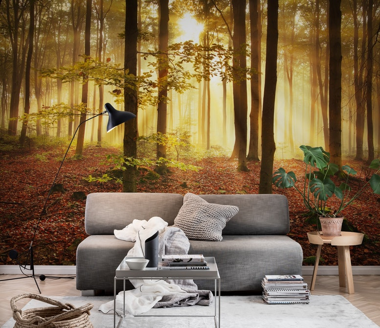 Autumn forest Wall mural Photo wallpaper Large Happywall