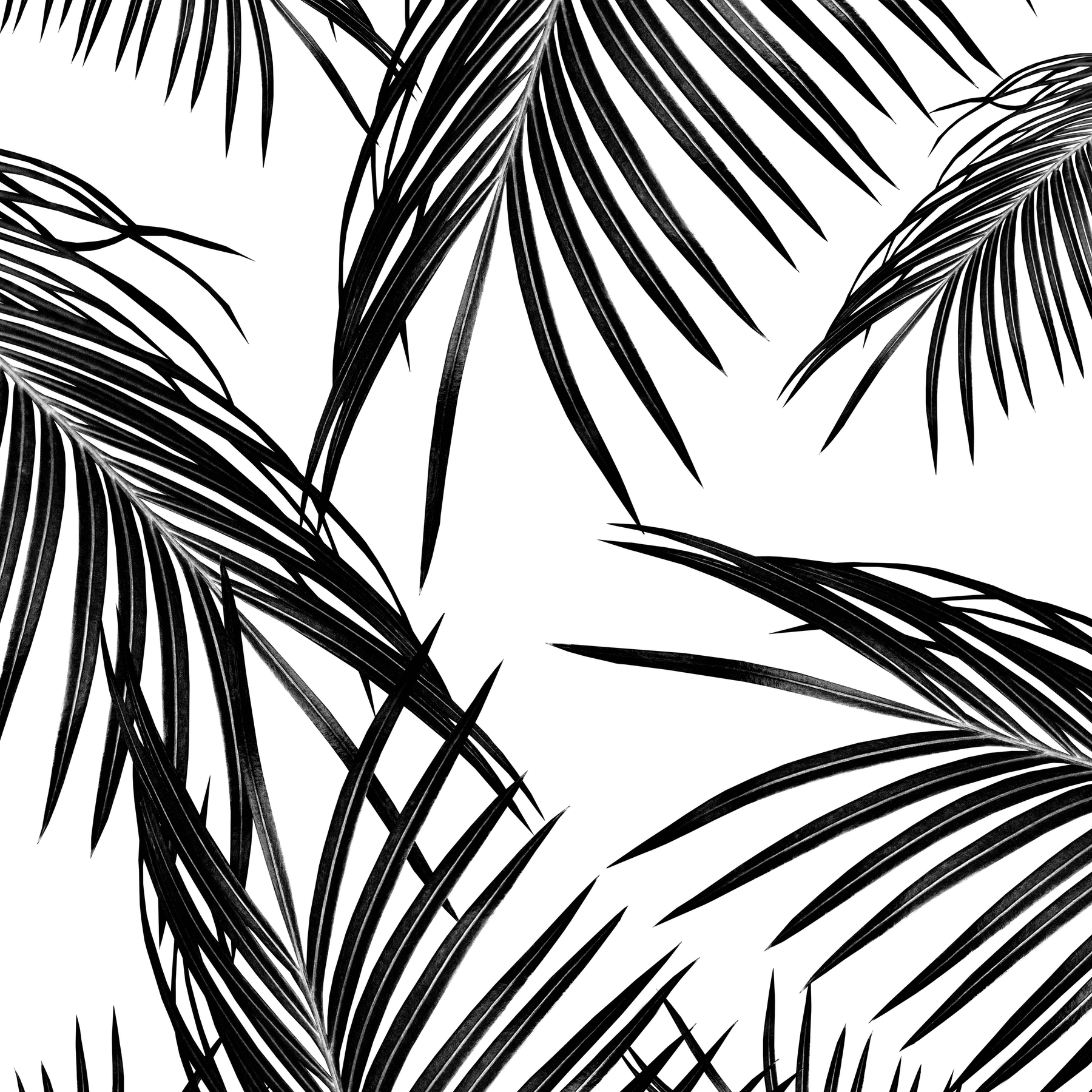 Buy Black Palm Leaves Dream 1 Wallpaper Free Us Shipping At Happywall Com