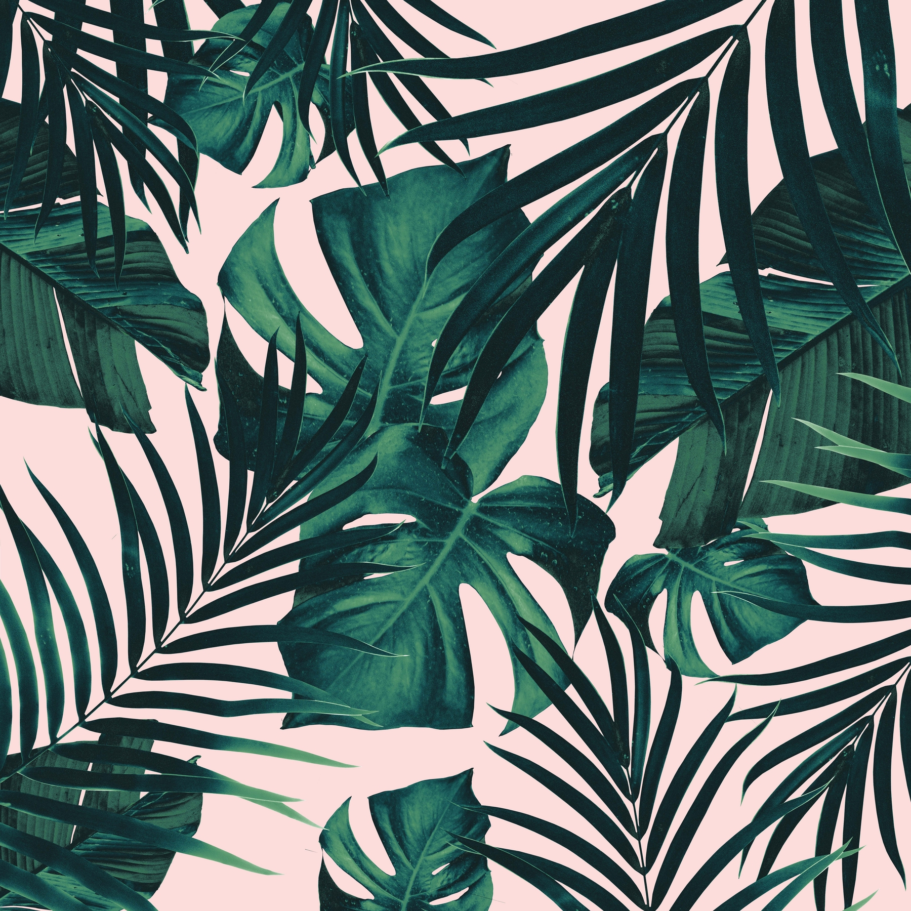 Buy Tropical Jungle Leaves 5 Wallpaper Free Us Shipping At Happywall Com Download, share or upload your own one! tropical jungle leaves 5 wallpaper