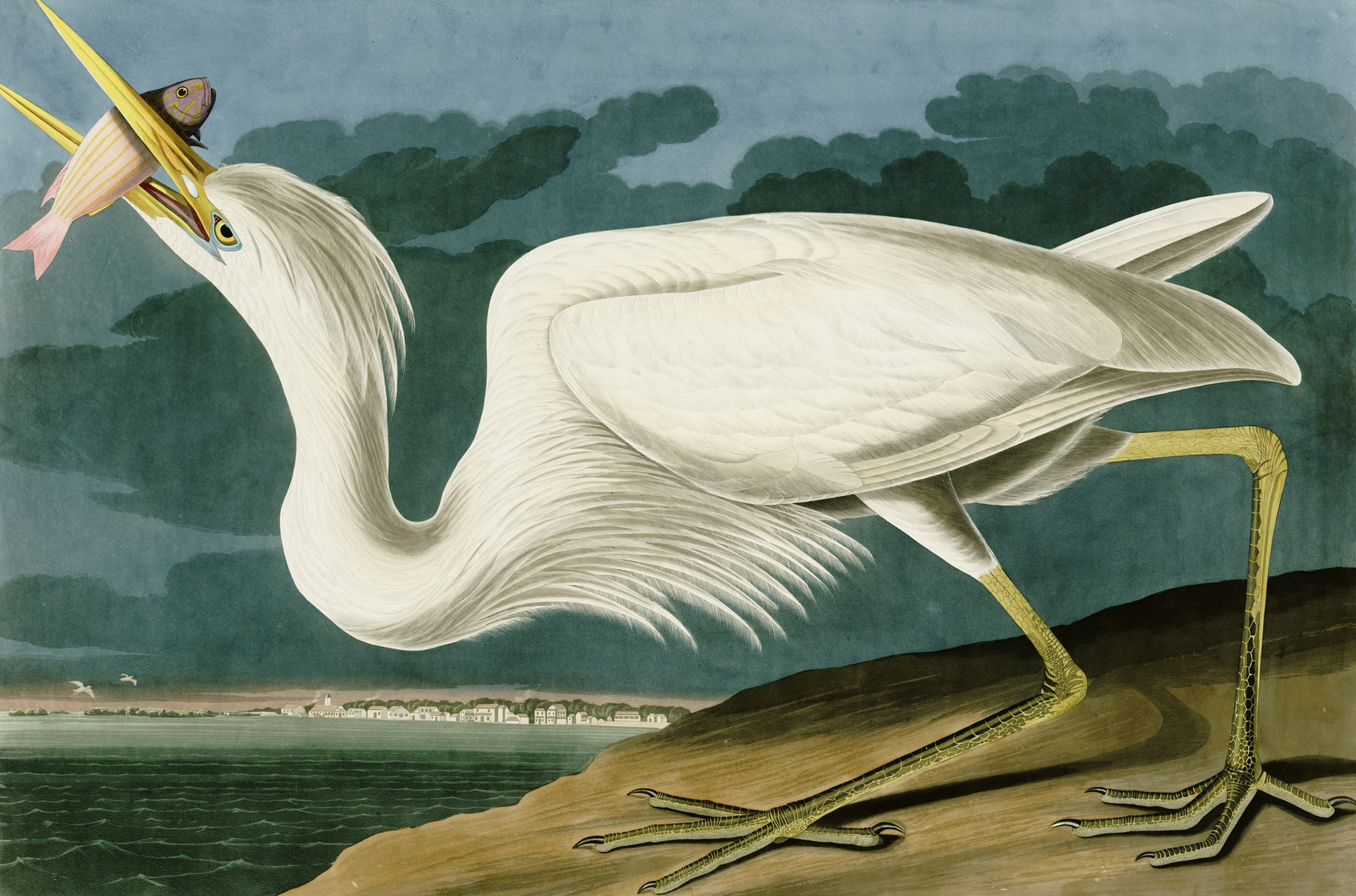 white heron question Start studying a white heron learn vocabulary, terms, and more with flashcards, games, and other study tools.
