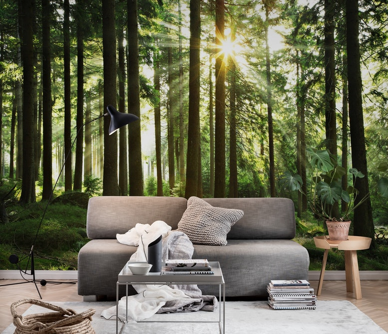 Forest light Wall mural Photo wallpaper Trees Happywall