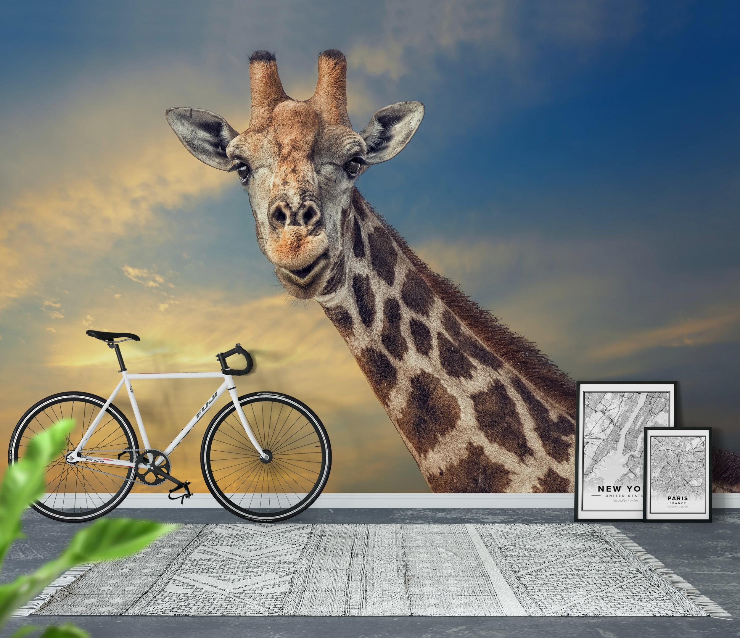 wallpaper giraffe wall mural happywall